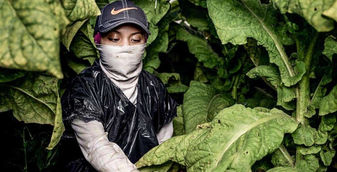 A push to equalize labor laws for child farmworkers, who are often immigrants