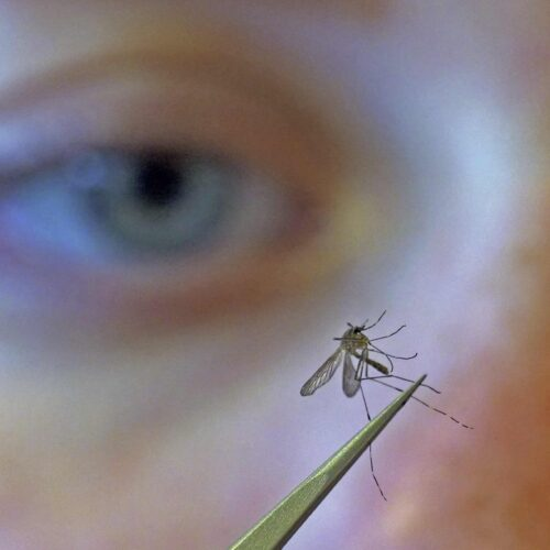 Man vs. mosquito: At the front lines of a public health war – Center for Public Integrity